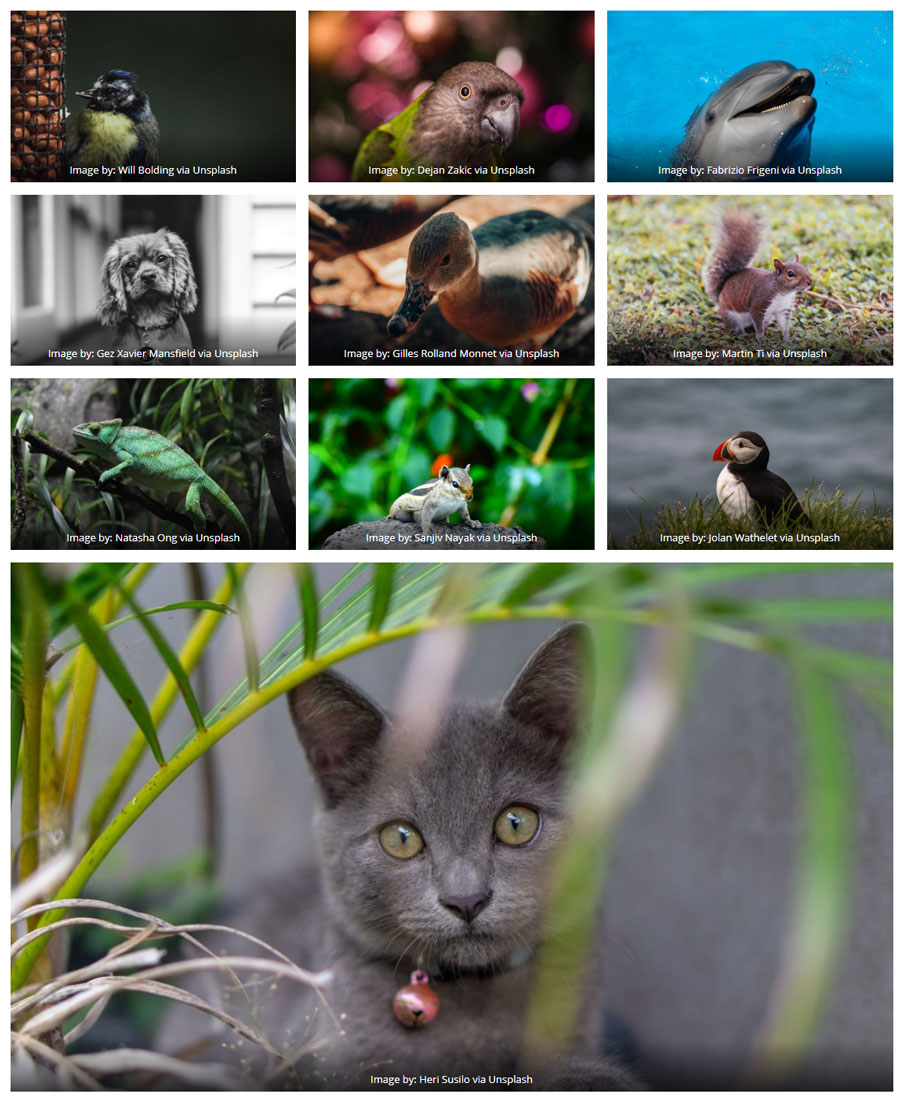 This is a screenshot of an image gallery taken from a Gutenberg enabled page.